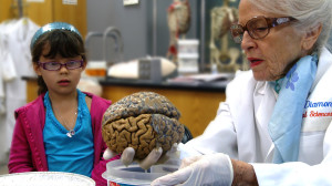 Marian Diamond shows the brain to 4 year old girl.