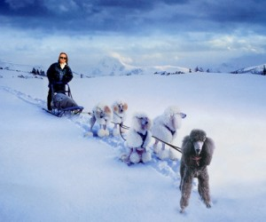 Catherine Ryan wins Iditarod with all poodle team, lead by Luna